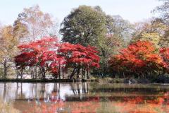 「遠景近景」 清水公園の紅葉 6