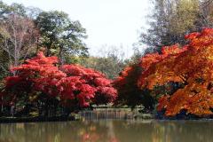 「遠景近景」 清水公園の紅葉 7