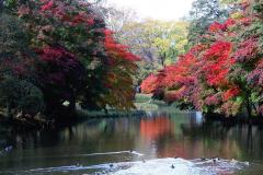 「遠景近景」 清水公園の紅葉 8