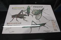 昆虫画家の今沢カゲロウさんが帯広で個展 3