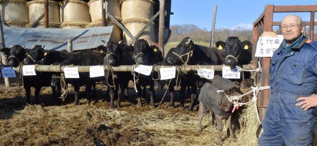 黒毛和牛6世代そろう 繁殖農家の清水さん 足寄