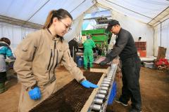 管内で始まったビートの苗作り作業。鎌田農園では家族総出で作業にあたった(27日午前10時半ごろ、助川かおる通信員撮影)