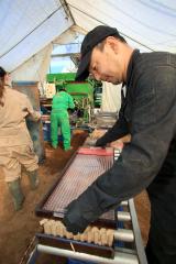 管内で始まったビートの苗作り作業(27日午前10時20分ごろ、助川かおる通信員撮影)
