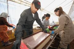 管内で始まったビートの苗作り作業(27日午前10時15分ごろ、中札内村の鎌田農園で。助川かおる通信員撮影)