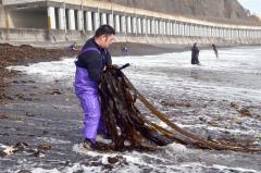 広尾の沿岸でコンブを水揚げする漁業者