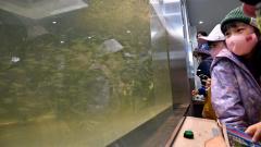 サケの稚魚を観察する子どもたち