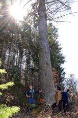 「遠景 近景」 樹齢115年のカラマツ 池田町 3