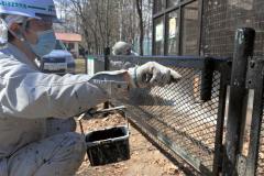 獣舎の柵を塗装する作業員