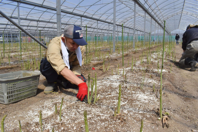 北王農林で農福連携本格化 幕別