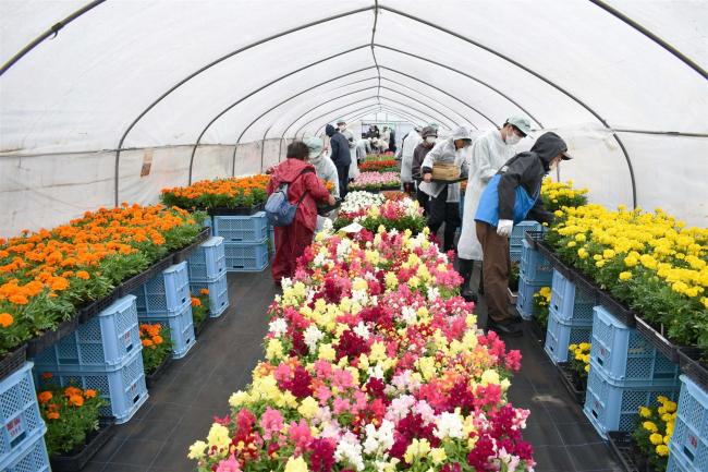 帯広農業高校で花の苗販売