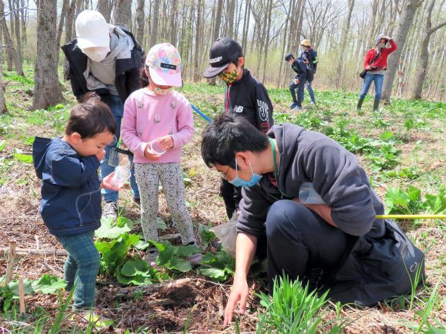 春の野原で植物や虫を観察 更別