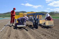 専用の機械で種イモの植え付け作業に当たる上口さん(左)ら