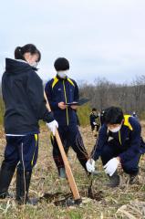 くわで穴を掘り苗を植える生徒たち