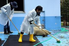動物の世話に汗を流す参加者