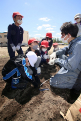 JA青年部の指導で児童が種イモ植える 本別中央小 3