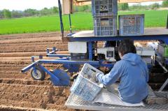 播種(はしゅ)用機械に乗り、手作業で種イモを植え込む小泉さん(18日午後2時22分、帯広市基松町で)