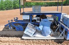 ナガイモの種を植える小泉さん(18日午後1時54分、帯広市基松町で)