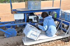 ゆっくり進む作業機に座り、手作業で種イモを植える小泉さん(18日午後1時55分、帯広市基松町)
