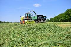 収穫が始まった一番牧草。今年は平年並みの出来で推移(幕別町新和)
