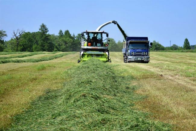 栄養満点、一番牧草の収穫開始