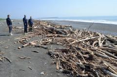 沿岸に漂着した流木の状況を確認する酒森町長や大樹漁協の関係者