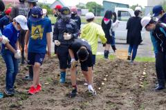 ジャガイモを植え付ける児童ら