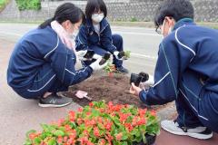 池田高校生が花壇整備 池田 3