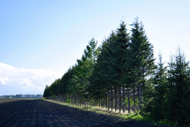 守れ耕地防風林 GPS受信影響 10年で3割減 農家や行政が対応策検討