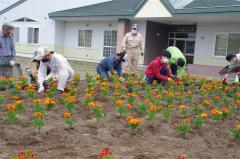 花壇に花苗を植え付ける有志