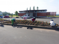 交通安全願い、ヒマワリの種植え 上士幌駐在所と商工会女性部 3