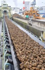 全道合計の43%を占める砂糖生産量となった20年の十勝産ビート(写真は日本甜菜製糖芽室製糖所)