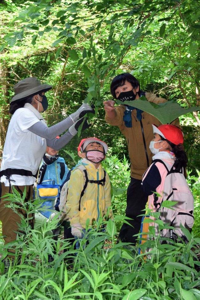 池田小1年生が森林体験学習 池田