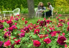 色も香りもさまざまなバラが咲き誇る十勝ヒルズのローズガーデン(塩原真撮影)