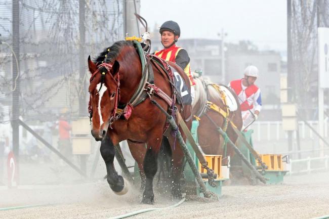 ばんえい競馬の松井調教師が通算1500勝達成 歴代7人目