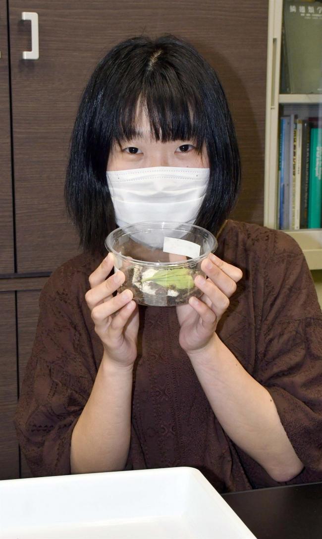 帯畜大大学院の開澤さん、イシムカデの一種を日本本土で初確認 日本蜘蛛学会誌に掲載