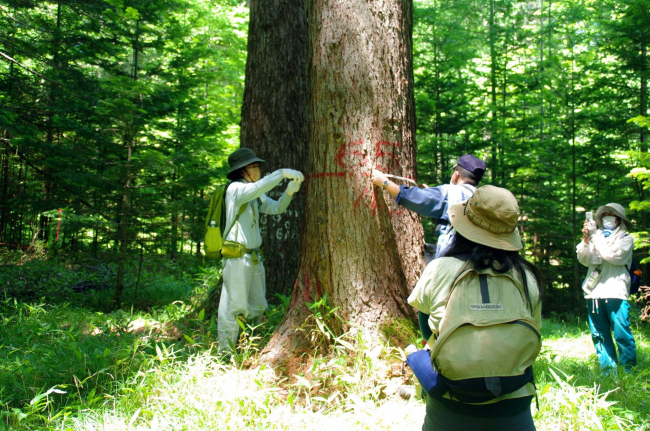 総合振興局森林室が森林散策会 浦幌