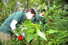 外来植物の引き抜き作業を行う帯広ローターアクトクラブの会員ら(11日、緑ケ丘公園)