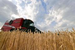 管内畑作のトップを切って収穫が行われた秋まき小麦(19日、芽室町西士狩で。塩原真撮影)