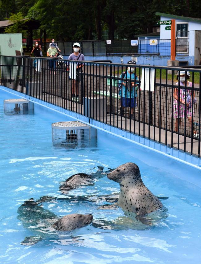 アザラシ一家、新しい獣舎にお引っ越し おびひろ動物園