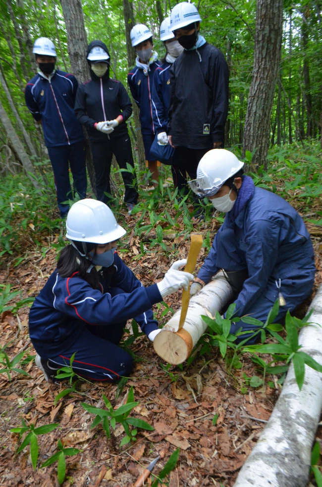シラカバ樹皮の採取を体験 池田高校生