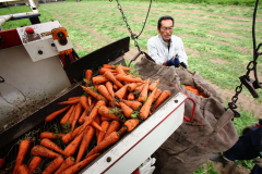 作柄上々、ニンジンの収穫が始まる 音更 10