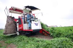 作柄上々、ニンジンの収穫が始まる 音更 2