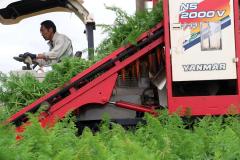 作柄上々、ニンジンの収穫が始まる 音更 9