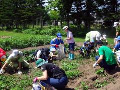草取りの作業に励む帯広農業高の生徒と子どもたち