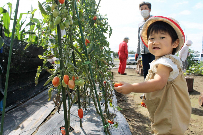 地域農園で収穫作業 音更