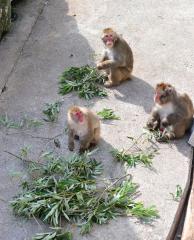 おびひろ動物園に伐採枝葉を寄付 北電ネット 4