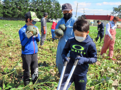 収穫に参加する児童ら