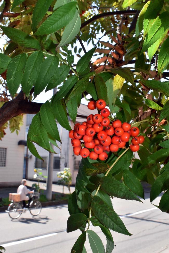 秋分の日、「夏日」も確かな秋の足音