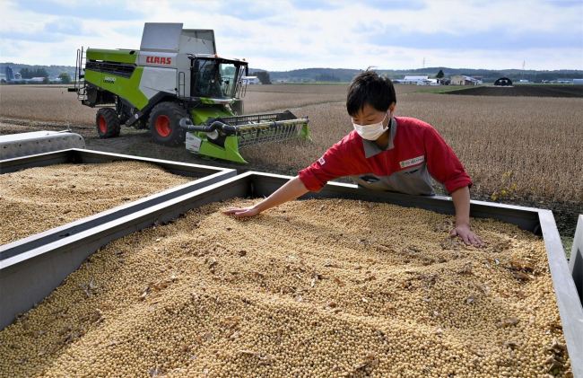 音更町で白目大豆の収穫がスタート