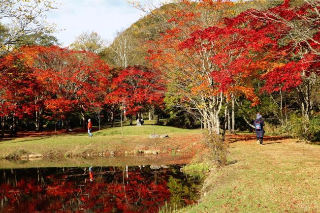 錦秋の彩りピークに 福原山荘の紅葉が見頃 鹿追